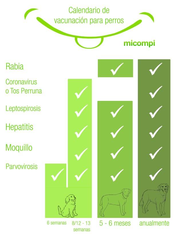 infografía vacunación perros