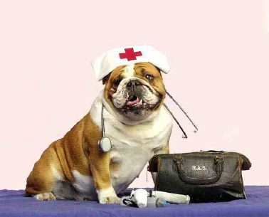 Primeros auxilios perros