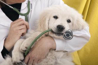 Seguros para perros Adeslas. Micompi.com