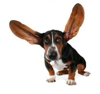 La otitis en Perros- Remedios Caseros