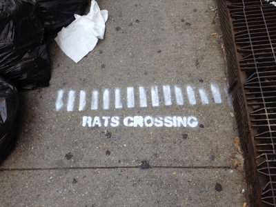 Mind the rats, please.