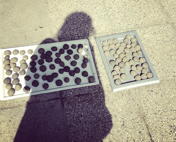 Seedbombs created at a workshop in Budapest