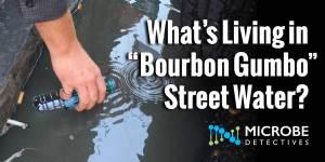 "What's Living in ""Bourbon Gumbo"" Street Water?"