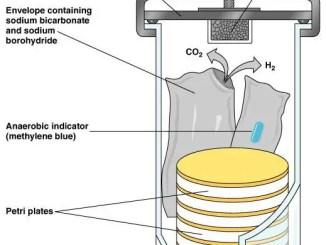 GasPak Anaerobic system