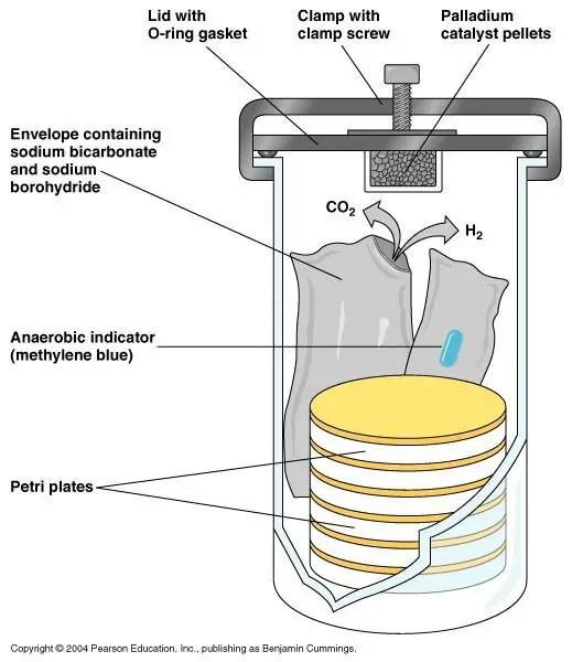 Anaerobic Jar: GasPak system