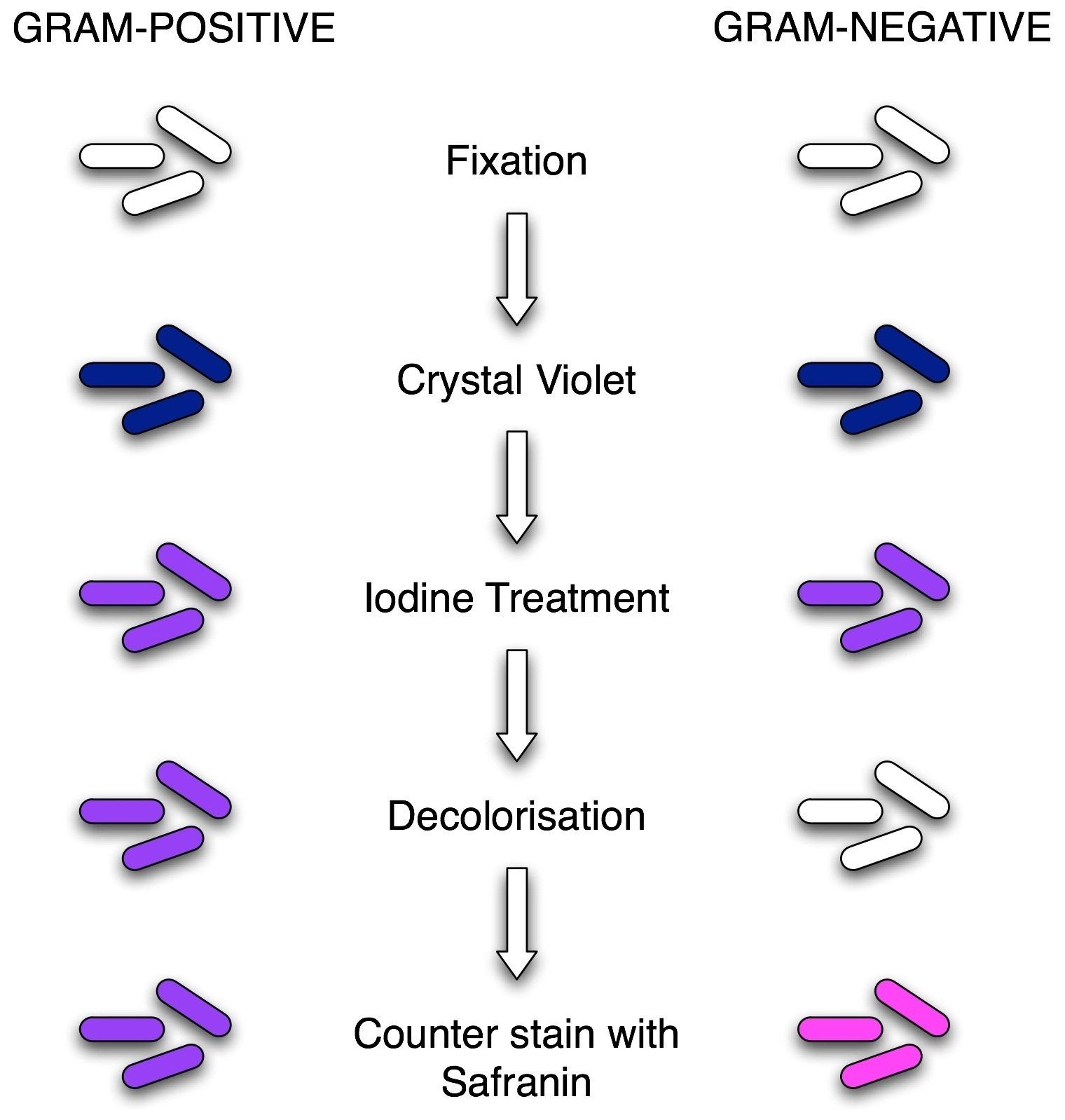 Gentian violet staining for vaginal infections