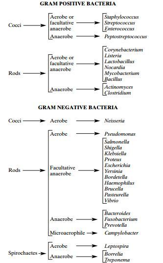 Names of common bacteria: the good, the bad, and the ugly.