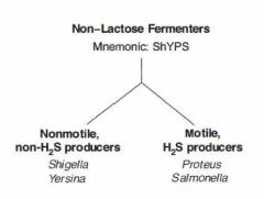 Mnemonic Lactose Fermenter and NLF