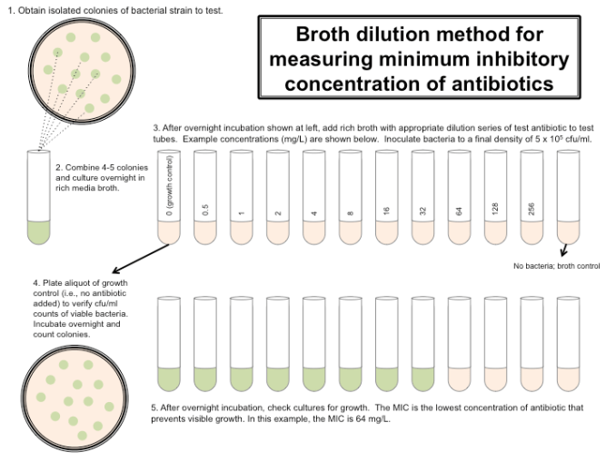 Broth dilution method for measuring minimum inhibitory concentration of antibiotics. (image source:labome.com)