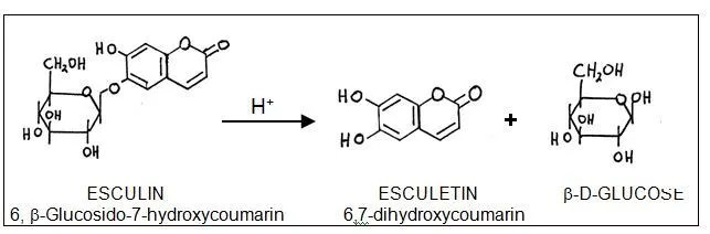 Esculin Hydrolysis; Chemical reaction