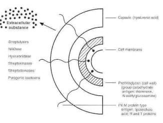 Virulence factors of S. pyogenes