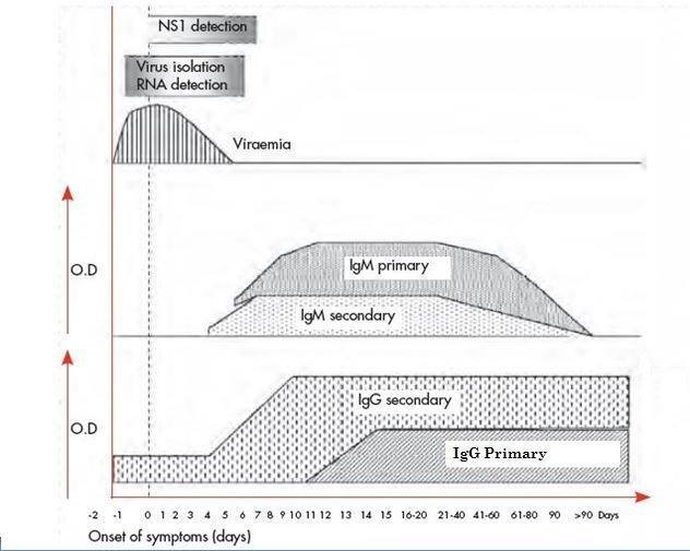 Fig 2: Approximate time-line of primary and secondary dengue virus infections and the diagnostic methods that can be used to detect infection