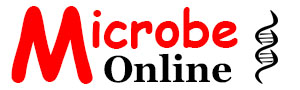 Learn Microbiology Online