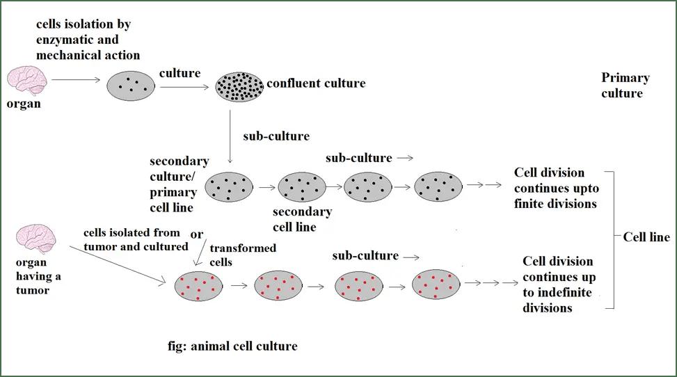 preparation of solid culture medium