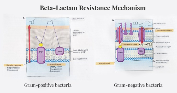 beta-lactam-resistance-mechanism