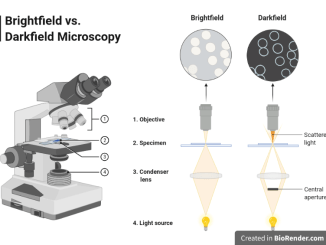 Components of Bright field microscope and difference in illumination with darkfield microscope.