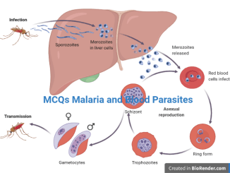 MCQs Malaria Life Cycle and Pathogenesis