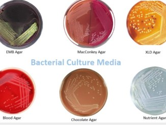 Common Bacterial Culture Media