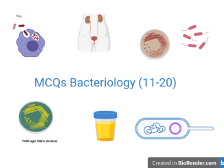 MCQs Bacteriology 11-20