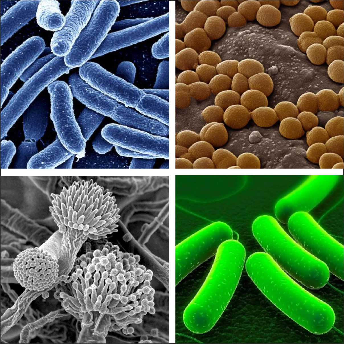 Types Of Microbes
