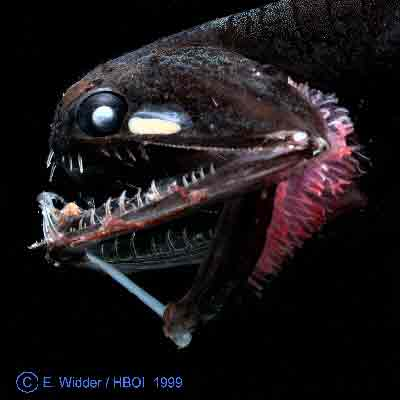 some kind of monstrous-looking fish