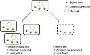 Bacteria's toxic addiction to DNA