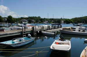 Woods Hole Sleuthing Leads to Unusual Bacterium