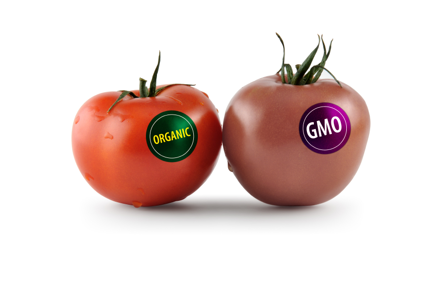 The genetically modified food fight