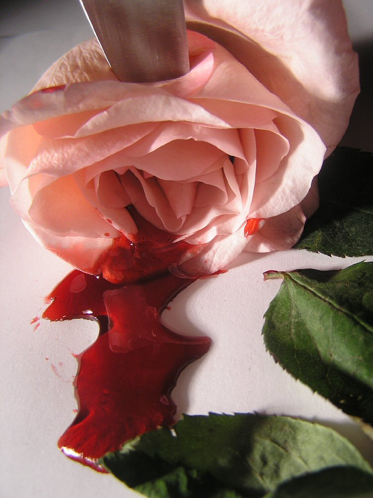 rose stabbed with a knife, bleeding