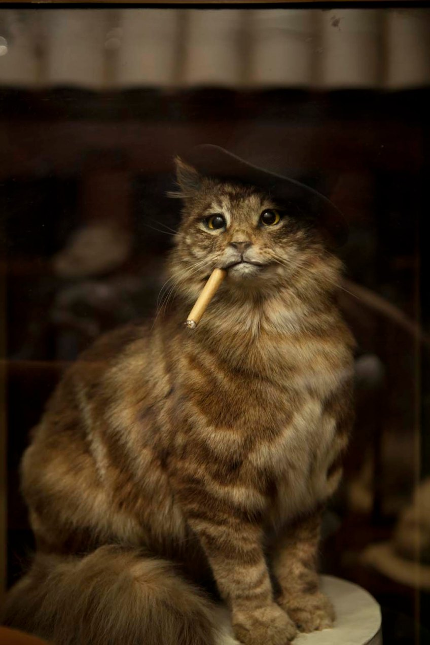 cat wearing a hat and smoking a cigarillo
