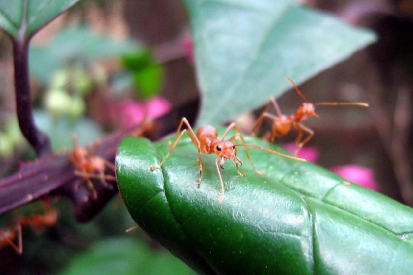 Ant on a Leaf by Jithin K U