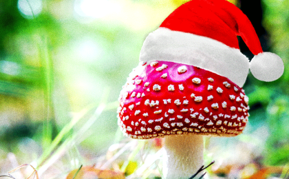Santa, Christmas and Magic Mushrooms
