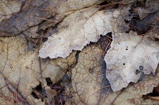 DSC_2390-dead-leaves