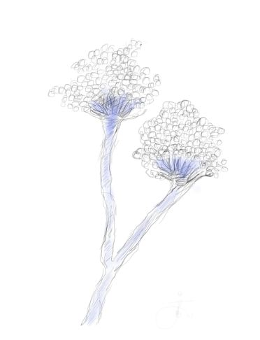 analysis of aspergillus fungi American phytopathological society,  we encourage everyone who works with fungi to get involved in the  phylogenetic analysis of aspergillus species using dna.