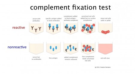 How the complement fixation serology test (CFT) works