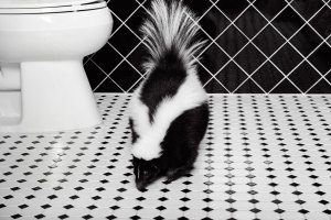Skunk on tile bathroom floor