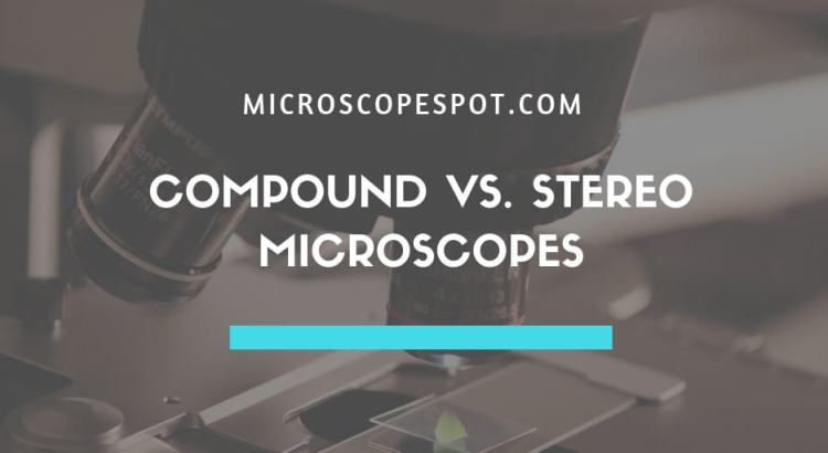 Compound Microscope vs. Stereo Microscope