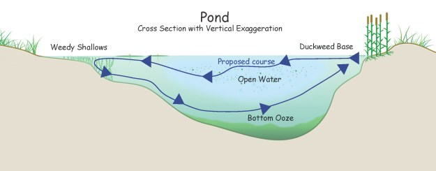 Pond Cutaway w-Course