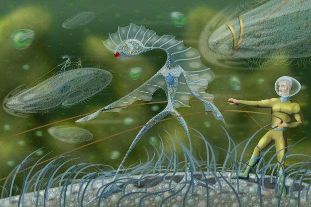 Microscopic beings, Microsians, and micronized human, ride on Paramecia through the micro wilderness of a freshwater pond.
