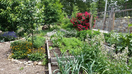 Micro Showcase garden May 2015