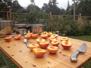 Peaches gettin' ready for canning