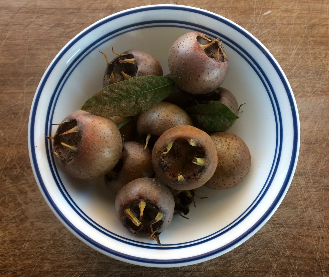Medlar (an old and rarely grown fruit)