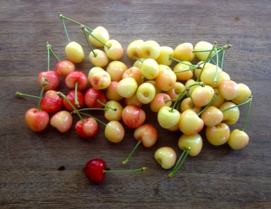 The 3-in-1 sweet cherry tree yielded a small harvest in 2014