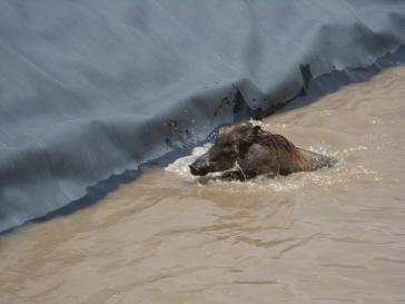 ethiopia warthog 2
