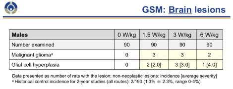 NTP GSM Glioma