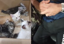 Telugu News Man caught trying to smuggle 4 kittens at Malaysia-Singapore border by hiding them in his pants .