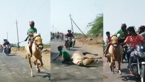9-year-old boy falls off running horse race, gets back on it, wins the race in Bengaluru kerur village Watch viral vide