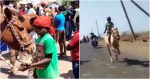 9-year-old karnataka boy lokesh performs daredevil horse stunt to feed family famous after fell from horse and get horse.