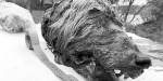 The 40,000-year-old severed head of a wolf, with teeth and fur, has been found in Siberia.
