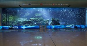 80m LED screens at Dubai Aquarium & Underwater Zoo